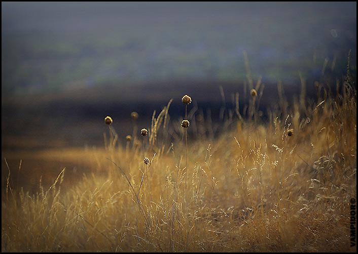 http://kubanphoto.ru/photos/1355/101694.jpg