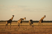 Namibia animals 2