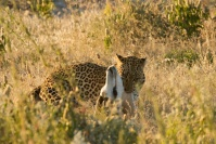 Namibia animals 4