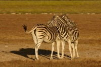 Namibia animals 8