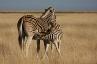 Namibia animals 9