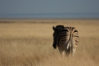 Namibia animals 10