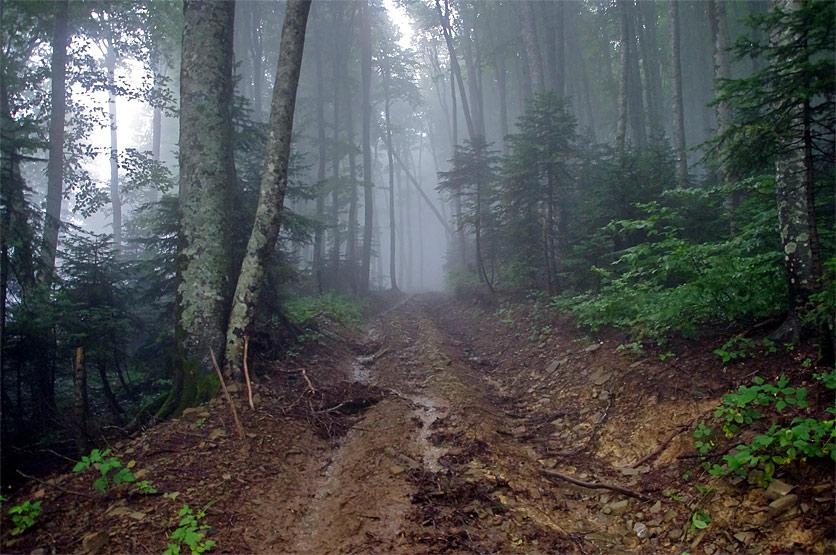 дождь в лесу песня