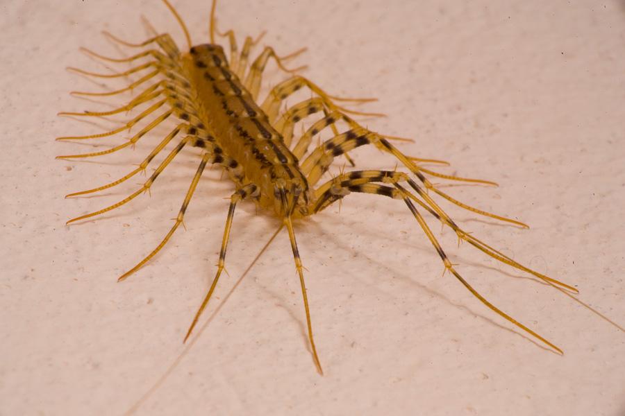 самые опасные паразиты для человека видео