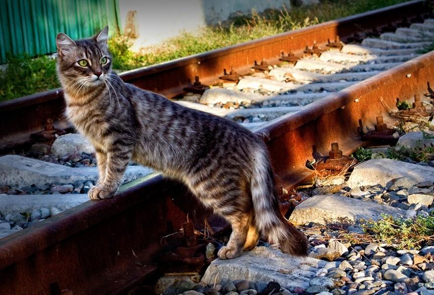 http://kubanphoto.ru/photos/4972/111990.jpg