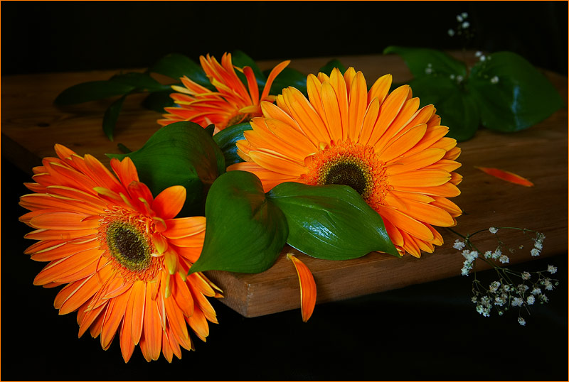 http://kubanphoto.ru/photos/65/39330.jpg