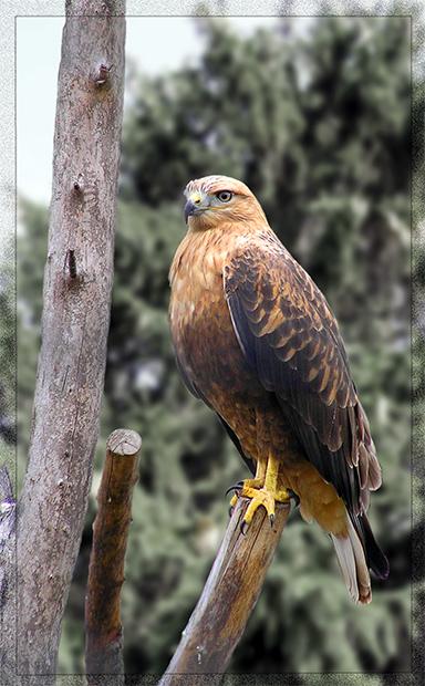 птичий обзор :) Накопились тут у меня фото птиц, в основном амадины, но...